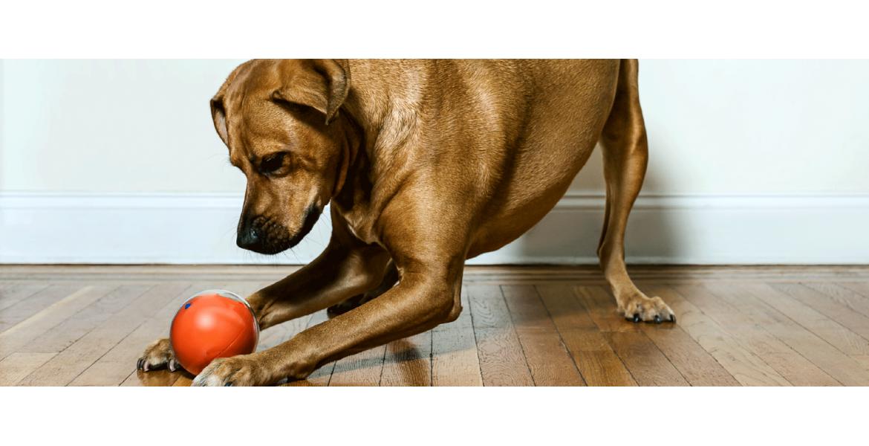 PlayDate - камера спостереження за тваринами у формі іграшки