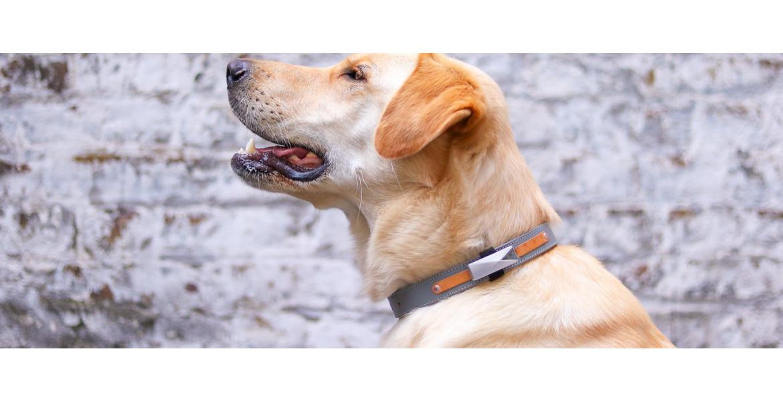 Felcana - майбутнє інтелектуального догляду за тваринами