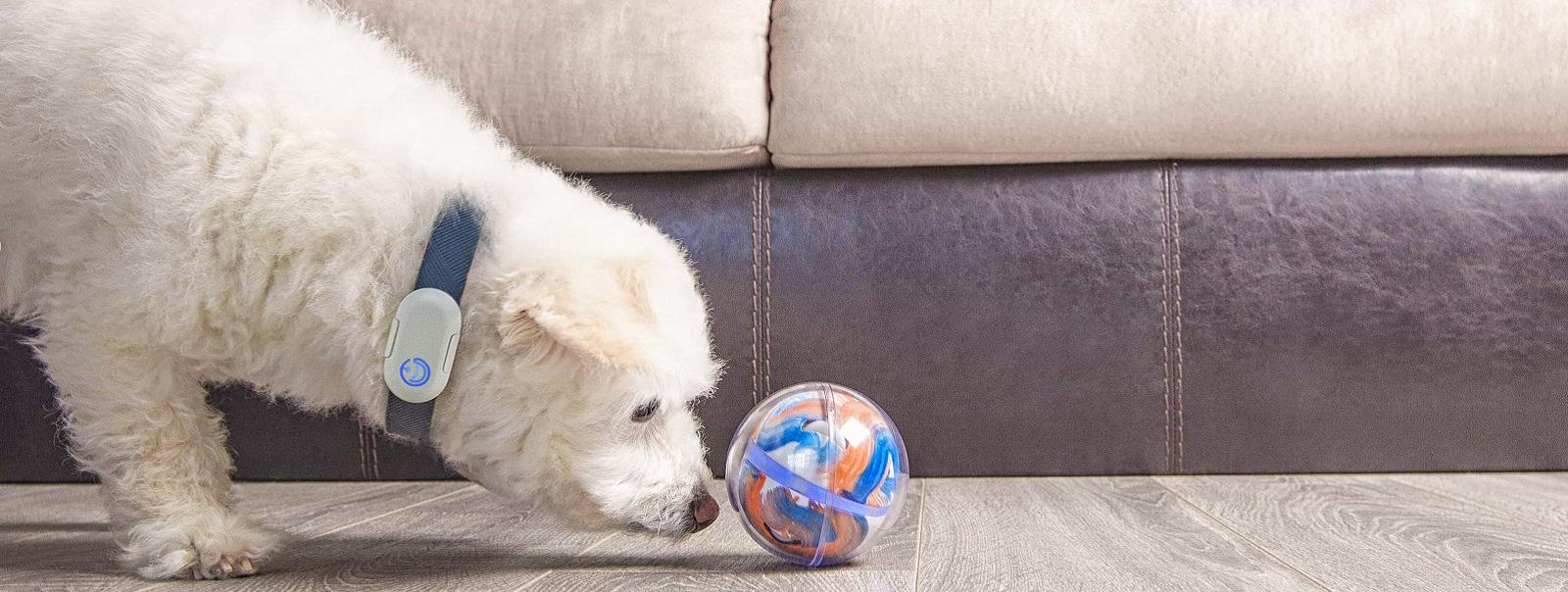 Pebby - розумний м'ячик для домашніх тварин з автоматичним заряджанням